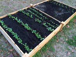 cold protection for the winter garden gardening in the panhandle