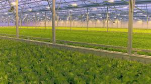 types of grow lights aerial inside greenhouse hydroponics cultivating different types