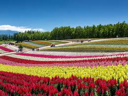 flower places 12 mesmerizing places to flowers bloom travel smithsonian