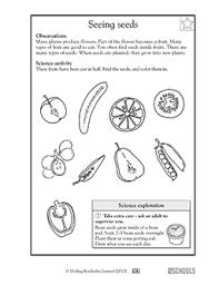 science worksheets for grade 1 worksheets