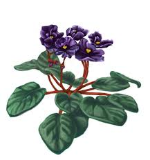 african violet tattoo clip art library