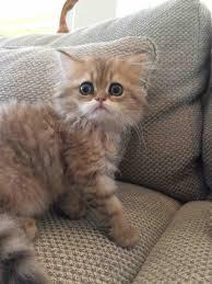 sharing funny cats part 159 40 pics 10 gifs love i love