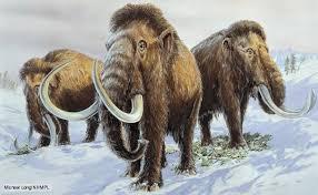 woolly mammoths ice age prehistoric fauna
