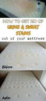 19 tips to learn how to get stains out sweat stains mattress