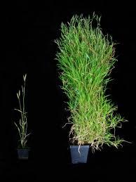 Plants That Need No Light The Hidden Memories Of Plants Atlas Obscura