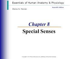 Human Anatomy And Physiology Marieb 7th Edition Essentials Of Human Anatomy U0026 Physiology Copyright 2003 Pearson