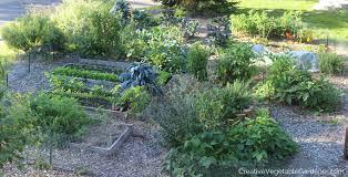 creative vegetable gardener tour of my garden september