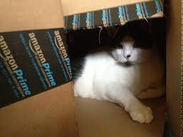 amazon prime is awesome cat not included but magically appears