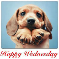 Funny Memes About Wednesday - wacky wednesday meme funny quotesbae