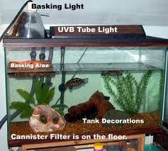 uvb light for turtles i have two musk turtles the female spends a lot of time on the