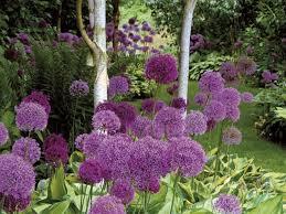 47 best backyard flower gardens images on pinterest backyard