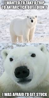 Polar Bear Meme - polar bear concerns imgflip