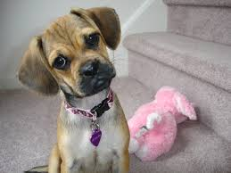 the cutest mixed dog breeds puppy face dog and animal
