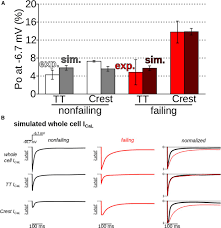microdomain specific modulation of l type calcium channels leads