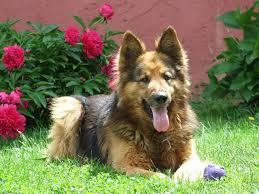 dog friendly landscaping ideas u2013 face foundation