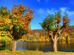 28 colorful trees in the autumn wallpaper location ideas 60 colorful trees in the autumn wallpaper location ideas 1280x960 colorful autumn trees amp river desktop pc