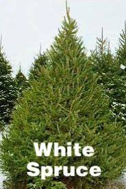 your guide to ontario farm grown christmas trees