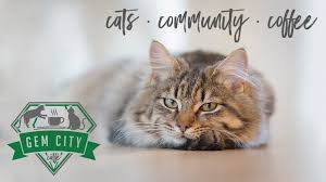 Cats In Small Spaces Video - gem city catfé dayton u0027s cat café and community space by karin