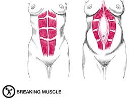 stomach muscles after c section 6 exercises for rebuilding your core after pregnancy breaking muscle