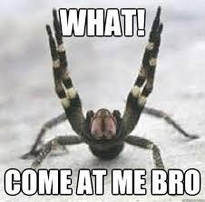 Spider Bro Meme - what come at me bro overly violent spider quickmeme