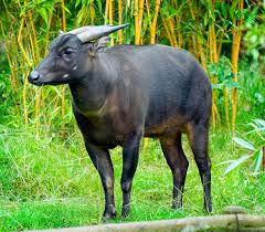 native plants and animals the 10 most rare animals you can only find in indonesia
