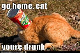 Drunk Cat Meme - go home you are drunk go home cat you are drunk
