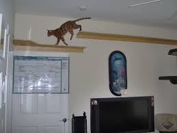 wall mounted cat stairs glen left a jpg