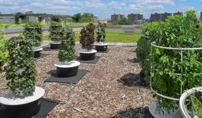 Urban Gardening New York 10 Urban Farms Transforming City Rooftops