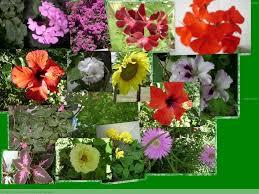 imagenes lindas naturaleza collage de flores muy lindas nelys miriam gamarra de armas