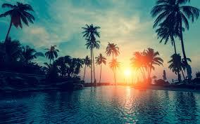 wallpaper sunset palm trees tropical beach hd nature 6500