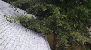 roof clearance tree service inc