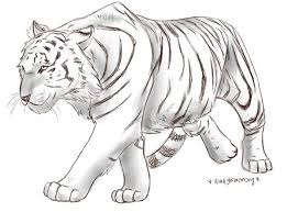 drawn tiiger anime pencil and in color drawn tiiger anime