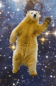 dancing bear in space gif on imgur