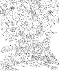 brown thrasher and cherokee rose georgia bird and flower coloring