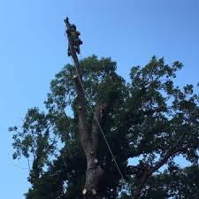 phillips family tree care 22 photos 12 reviews tree services