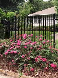 10 easy care plants for summer flowering shrubs hgtv