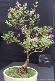 the delight of tiny trees the flourishing tree