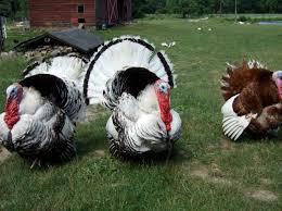 talkin turkey valley table