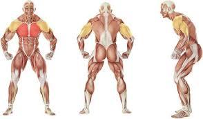 decline bench press muscles decline bench press muscles designsbyemilyf com