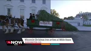 melania trump to accept white house christmas tree on monday