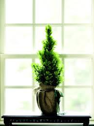 tiny trees impact in decor nell