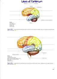 fetal pig mouth diagram labeled periodic u0026 diagrams science