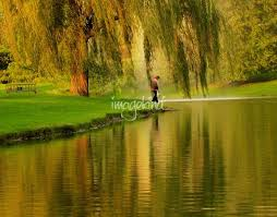 weeping willow tree nature landscape by carol f