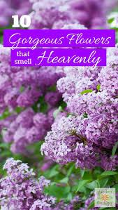 best 25 flowers for garden ideas on pinterest growing flowers