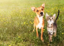 Ticks In Backyard Control Fleas Ticks In Yard Control Dog Cat Fleas Petmd