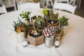 small potted plants etikaprojects com do it yourself project