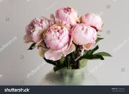 The Pink Peonies by Close Pink Peonies Glass Vase Against Stock Photo 516623062