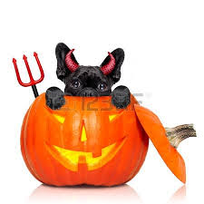 Zombie Dog Halloween Costume Zombie Dog Stock Photos Royalty Free Zombie Dog Images Pictures