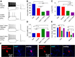 frequency dependent cell type divergent signaling in the