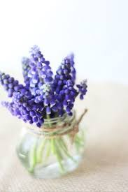 Bluebonnet Flowers - 110 best caygill spring colors images on pinterest spring colors